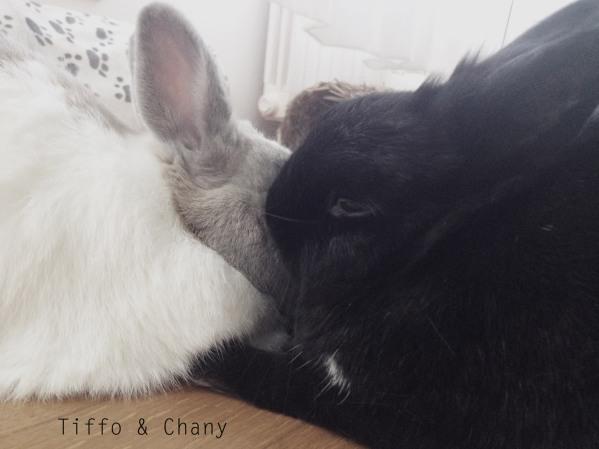 tiffo & chany
